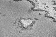 Coral Heart off Hardy Reef